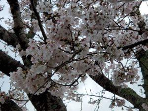 あいあいセンター桜
